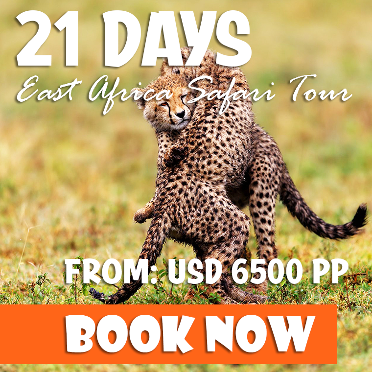 21 Days East Africa Safari Offer