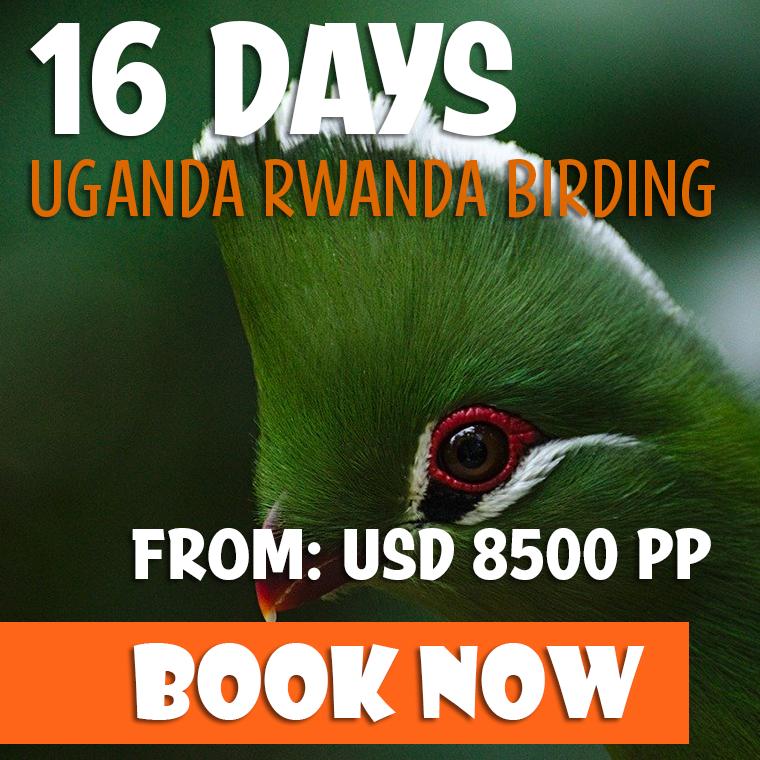 16 Days Bird Watching Safari Offer