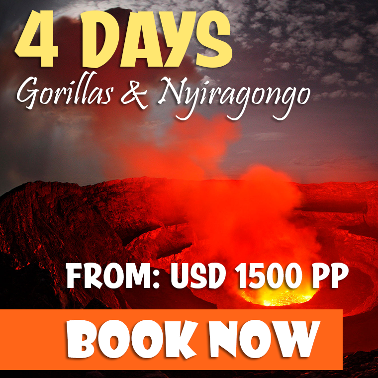 4 Days Congo Gorillas & Nyiragongo Safari Offer