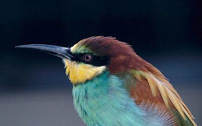 Rwanda Birding
