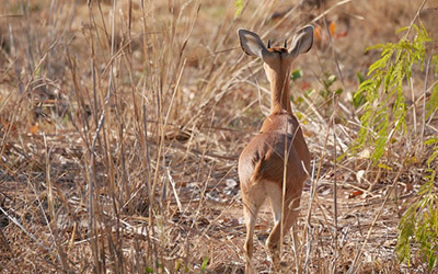 Rwanda Family Safaris