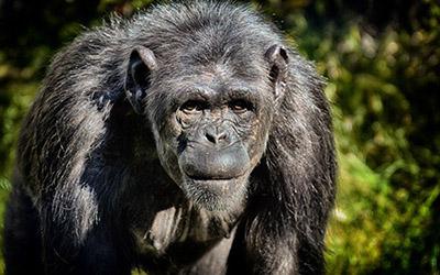 Tanzania Chimpanzee Trekking