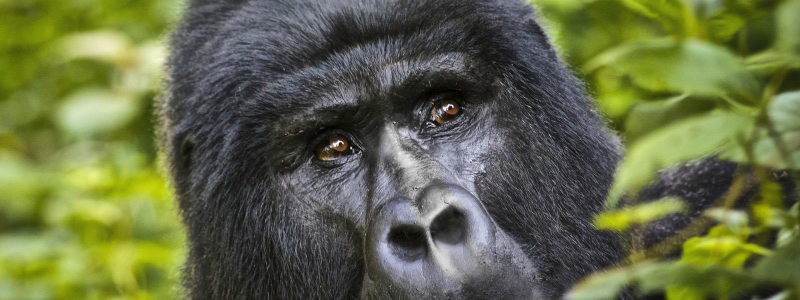 Uganda Safaris & Tours