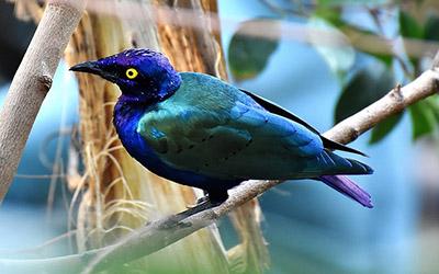 Zanzibar Birding
