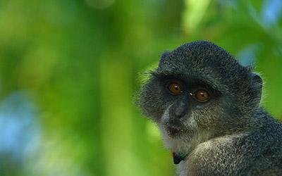 Zanzibar Primate Safaris