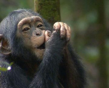 3 Days Rwanda Chimpanzee Trek in Nyungwe