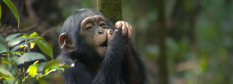 3 Days Chimpanzee Trekking in Kibale National Park