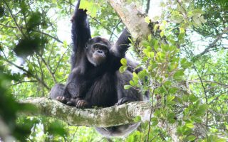 3 Days Rwanda Chimpanzee Trek