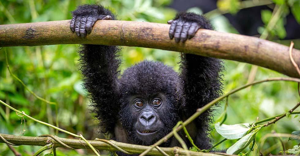2 days gorilla tour in Rwanda