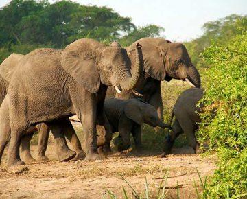7 days Rwanda Gorilla