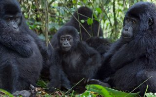 4 Days Uganda Gorilla Safari