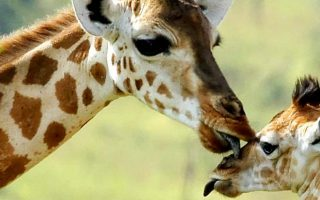 3 Days Murchison Falls Wildlife Safari