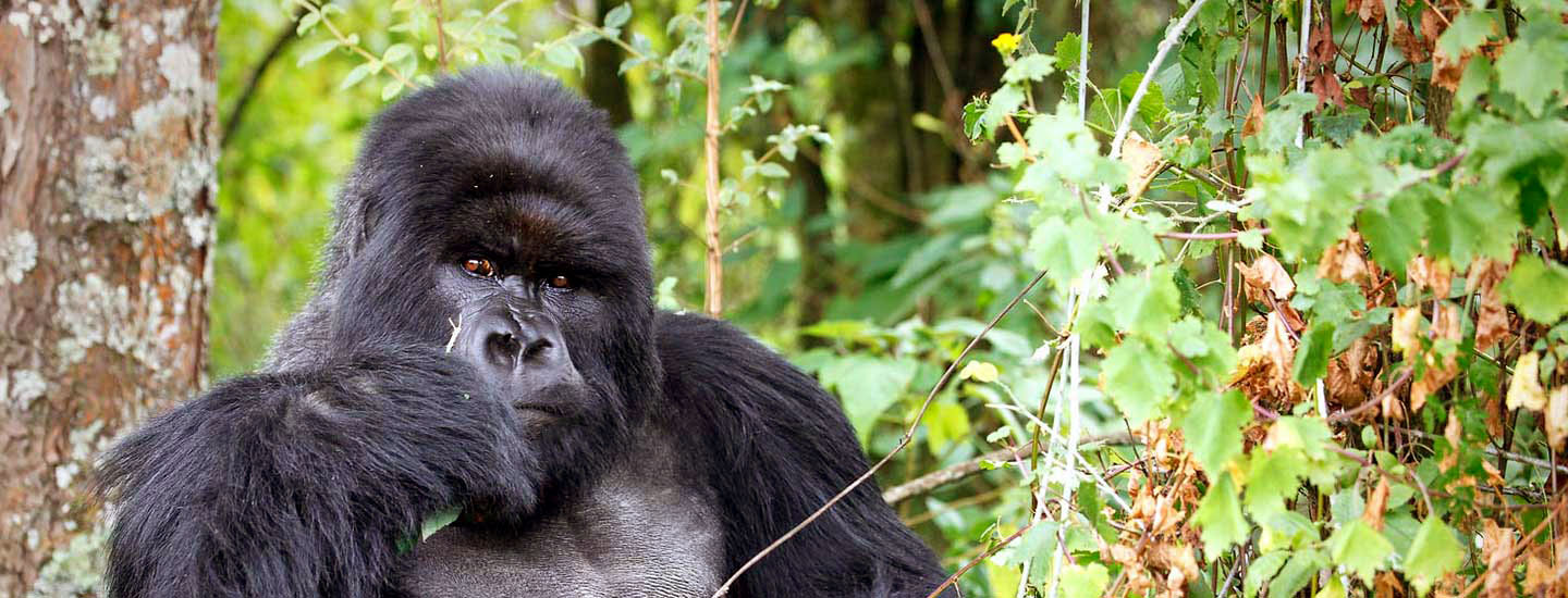3 days Rwanda gorilla and Dian Fossey tour