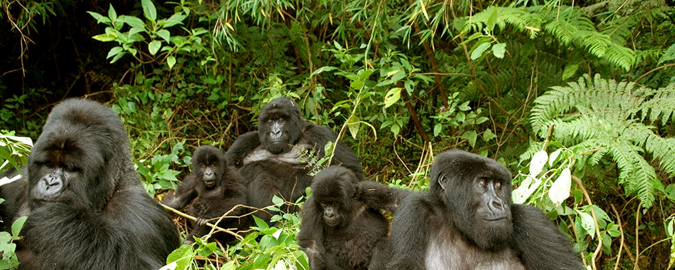 5 Days Gorilla Trekking and Wildlife Safari