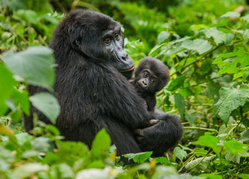 2 Days Rwanda