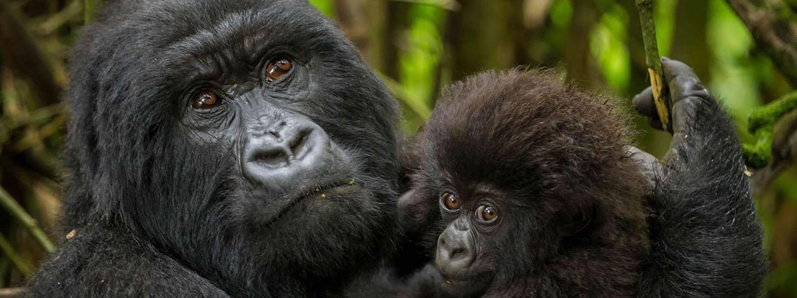 Africa Primates Safaris