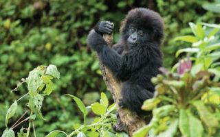 5 Days Uganda Rwanda Gorillas