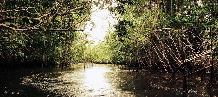 Mangroves National Park Congo