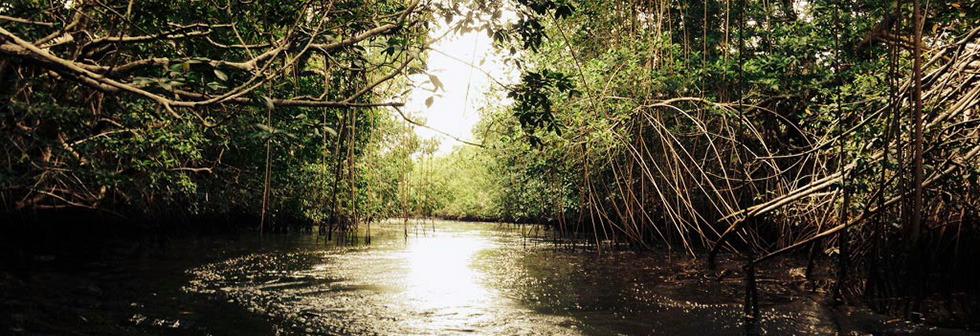 Mangroves National Park Congo