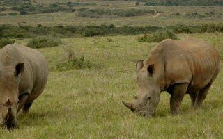 Garamba National Park Congo