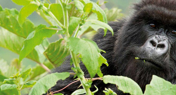 Essential Gorilla Trekking Gears