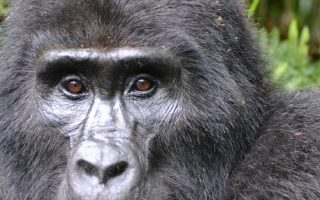 Are Gorilla Permits Refundable?