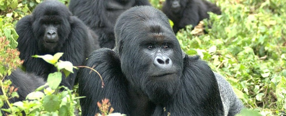 Best area for Gorilla Trekking in Bwindi