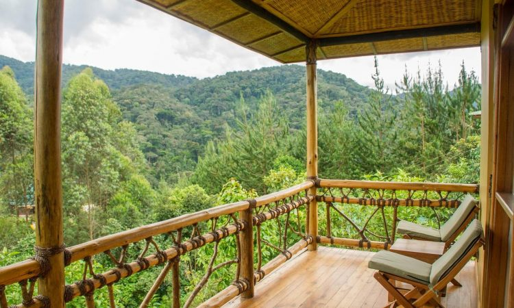 Mid-Range Lodges in Bwindi