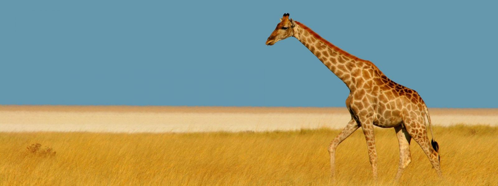 African Travel Experiences
