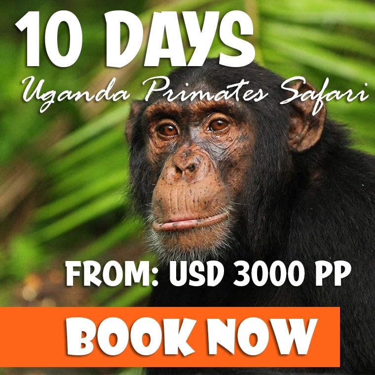 10 Days Uganda Primates Safari Offer